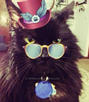 party cat 2
